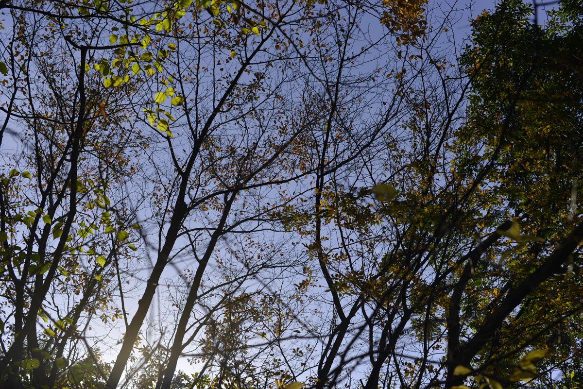ikoi20171110-02 ひな、でっかいよ、ひな! 五頭山麓いこいの森