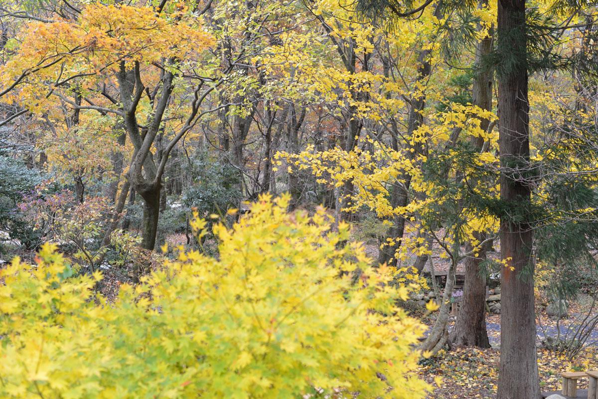 ikoi20171122-01 秋と冬が一緒にやってきた 五頭山麓いこいの森