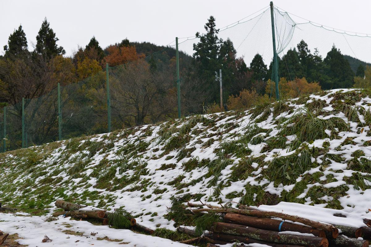 ikoi20171122-02 秋と冬が一緒にやってきた 五頭山麓いこいの森