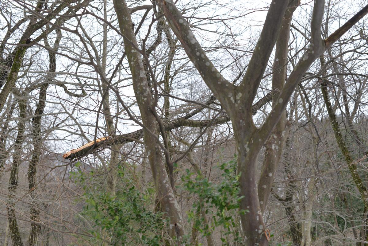 ikoi20180118-04 大きな枝が降ってきます 五頭山麓いこいの森