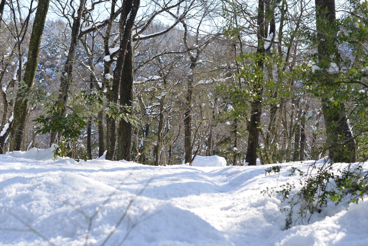 ikoi20180201-04 大雪とかまくらと雪だるまと 五頭山麓いこいの森