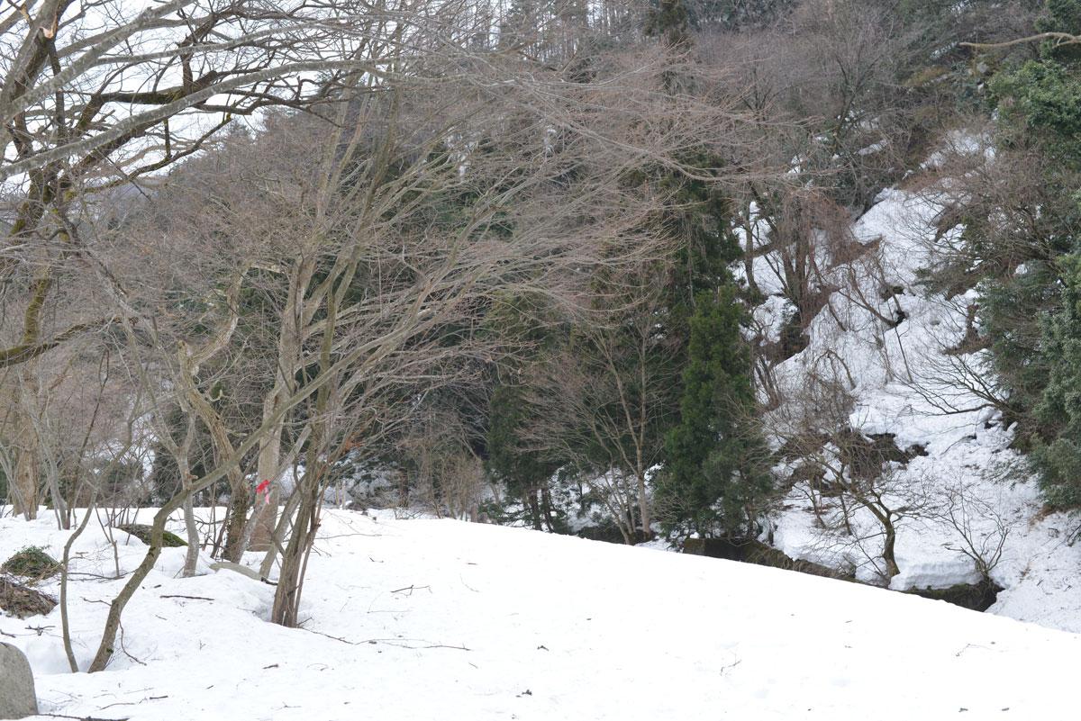 ikoi20180306-01 ここはまだ雪だらけ 五頭山麓いこいの森