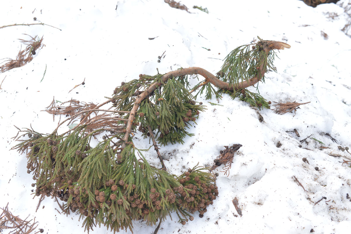 ikoi20180306-02 ここはまだ雪だらけ 五頭山麓いこいの森