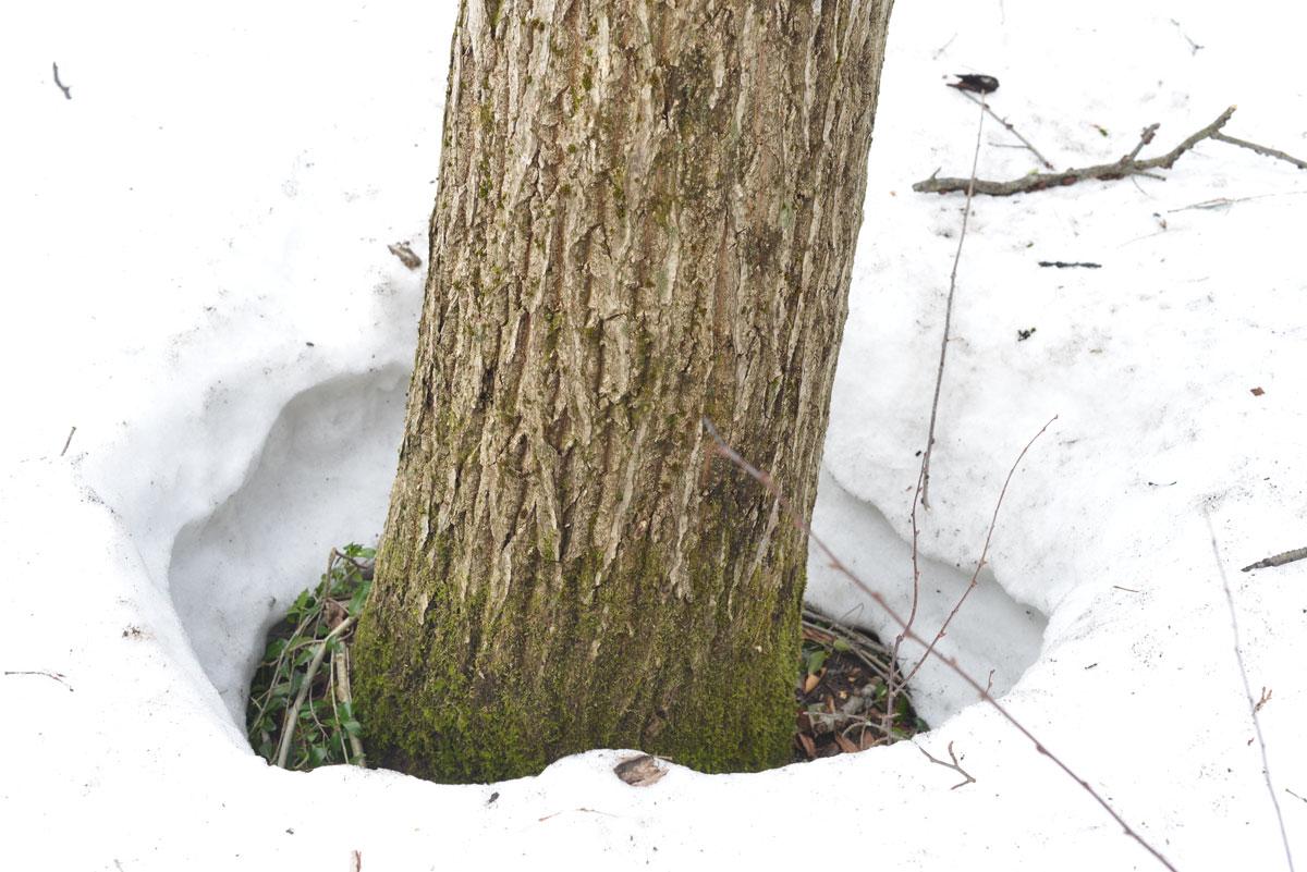 ikoi20180306-05 ここはまだ雪だらけ 五頭山麓いこいの森