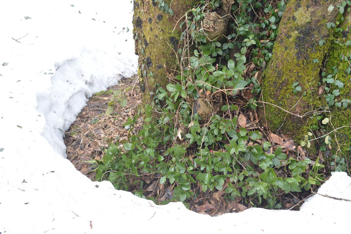 ikoi20180306-07 ここはまだ雪だらけ 五頭山麓いこいの森