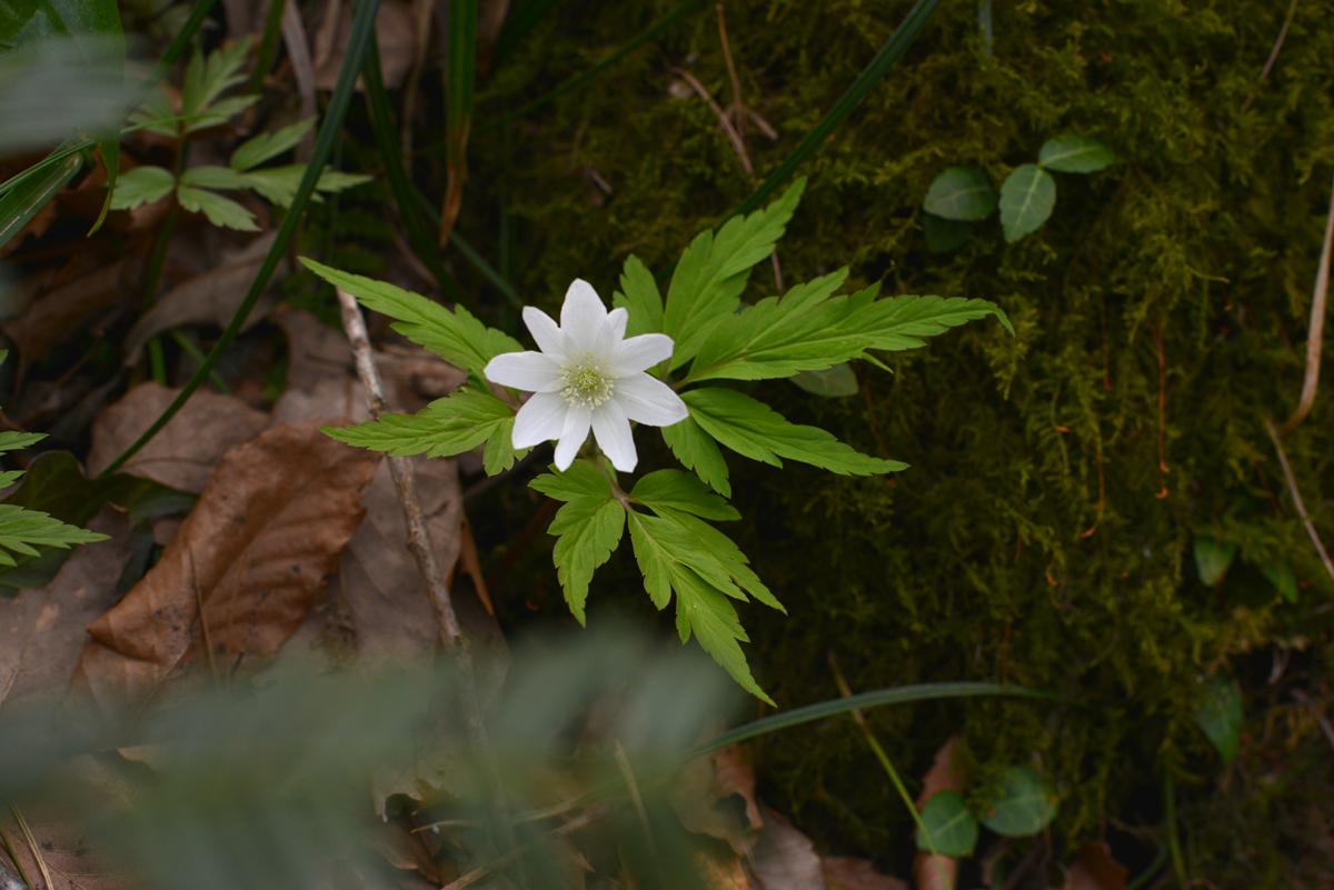 ikoi20180401-01 五頭山麓いこいの森にも春が来た 五頭山麓いこいの森