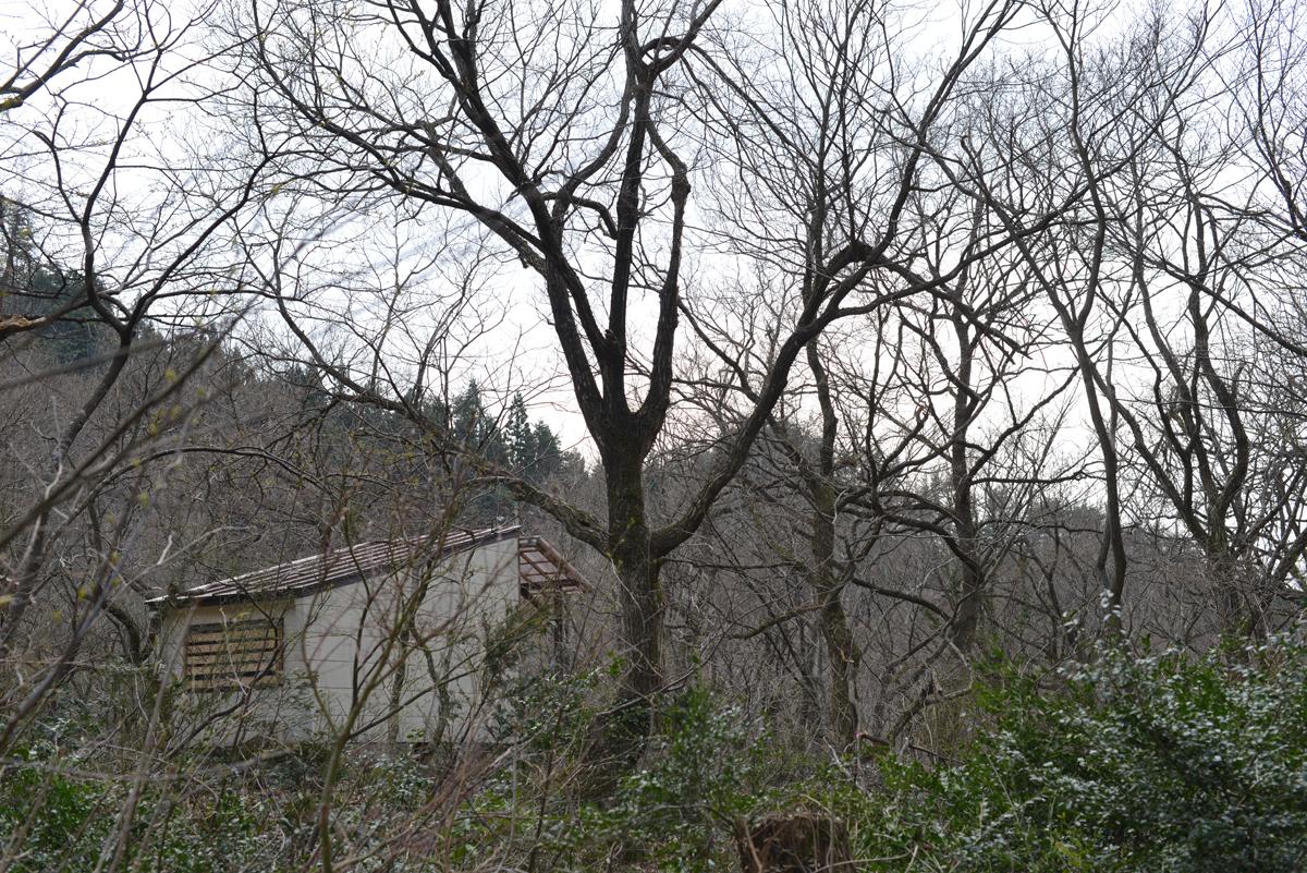 ikoi20180401-11 五頭山麓いこいの森にも春が来た 五頭山麓いこいの森