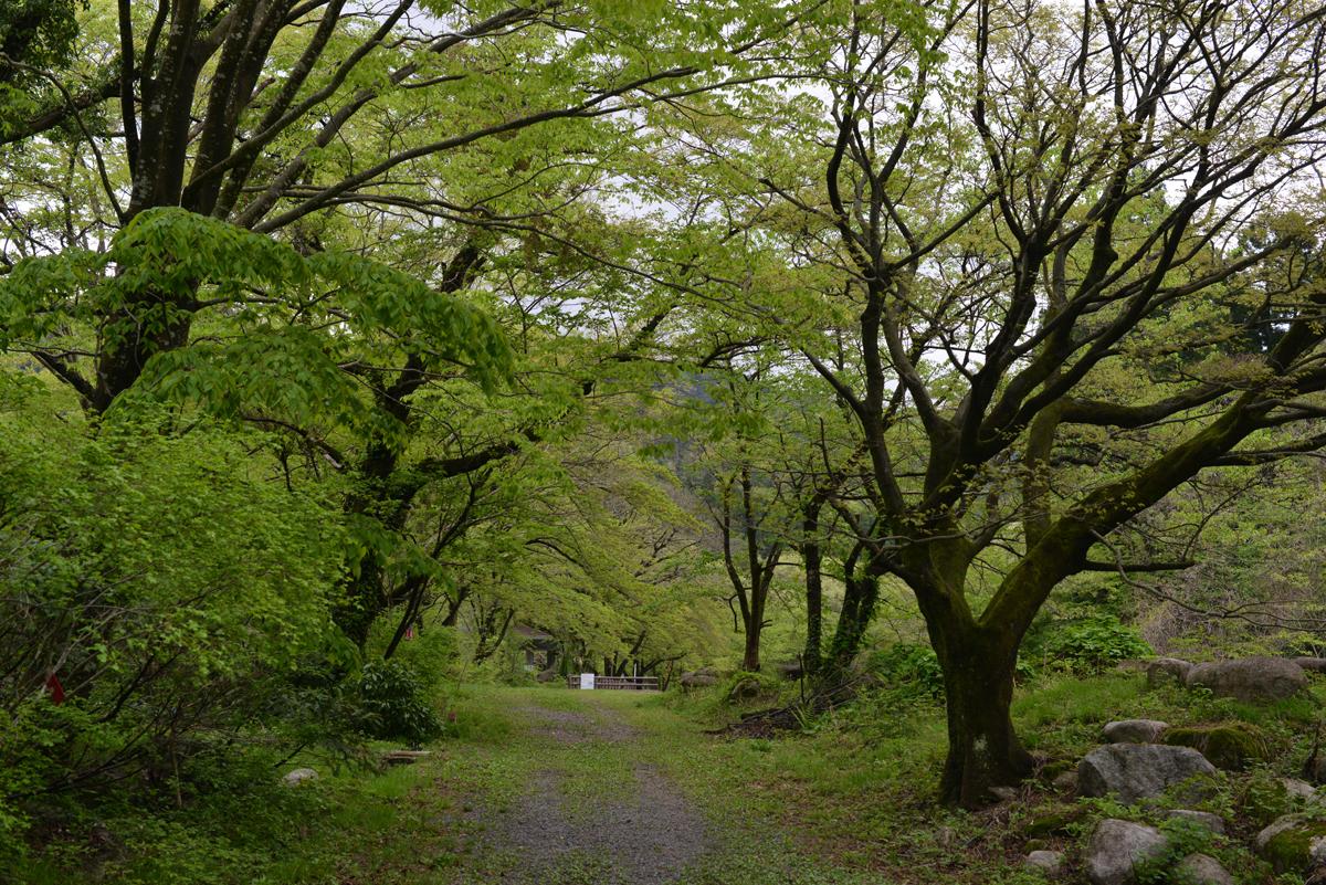 ikoi20180426-04 田起こしの準備ができるころ 五頭山麓いこいの森