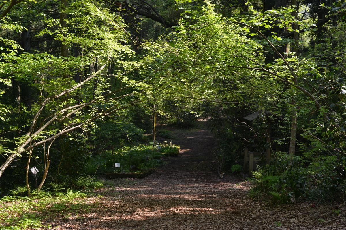 ikoi20180428-13 ゴールデンウィーク初日、ウォーキングしてみました 五頭山麓いこいの森