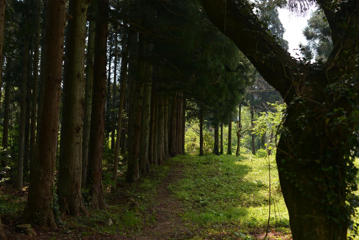 ikoi20180428-26 ゴールデンウィーク初日、ウォーキングしてみました 五頭山麓いこいの森