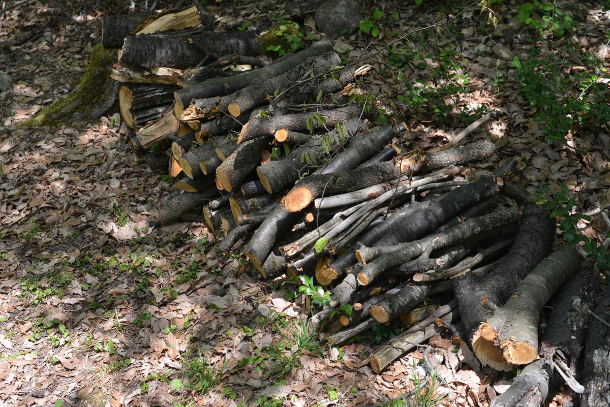 ikoi20180429-10 ゴールデンウィーク2日目の日曜日 五頭山麓いこいの森