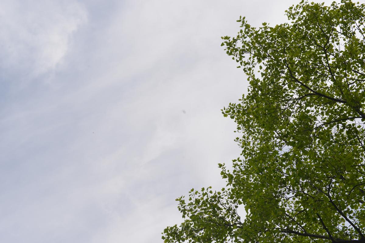 ikoi20180430-01 薄曇りのゴールデンウィーク3日目 五頭山麓いこいの森