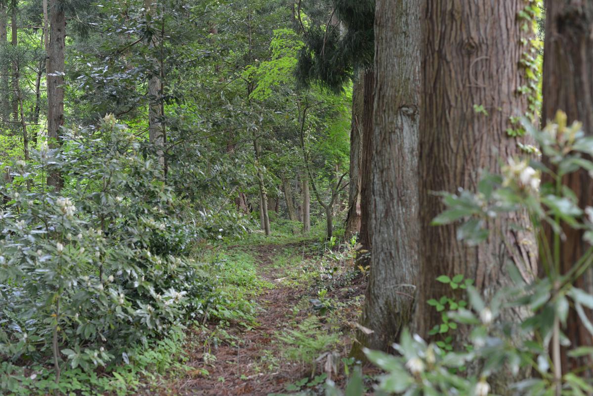 ikoi20180430-06 薄曇りのゴールデンウィーク3日目 五頭山麓いこいの森