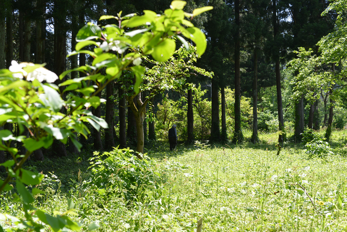 hataenomori20180511-05 緑が濃くなった 五頭山麓いこいの森