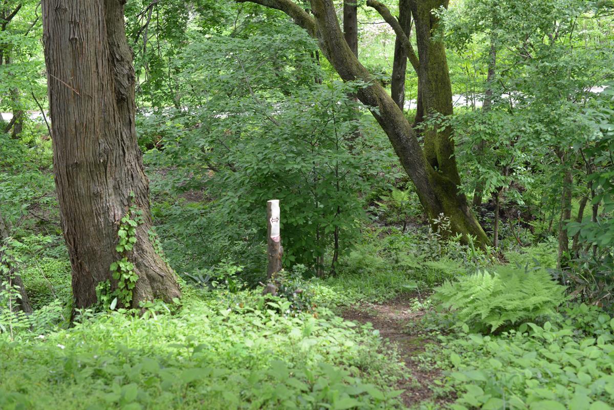 ikoi20180508-02 畑江の森に行ってみる 五頭山麓いこいの森