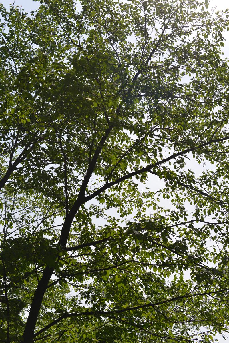 ikoi20180529-03 暑い日は川へ行きたい 五頭山麓いこいの森