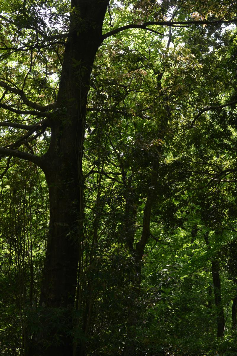 ikoi20180529-04 暑い日は川へ行きたい 五頭山麓いこいの森