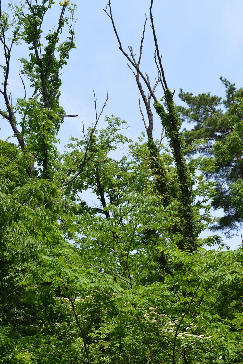 ikoi20180529-05 暑い日は川へ行きたい 五頭山麓いこいの森