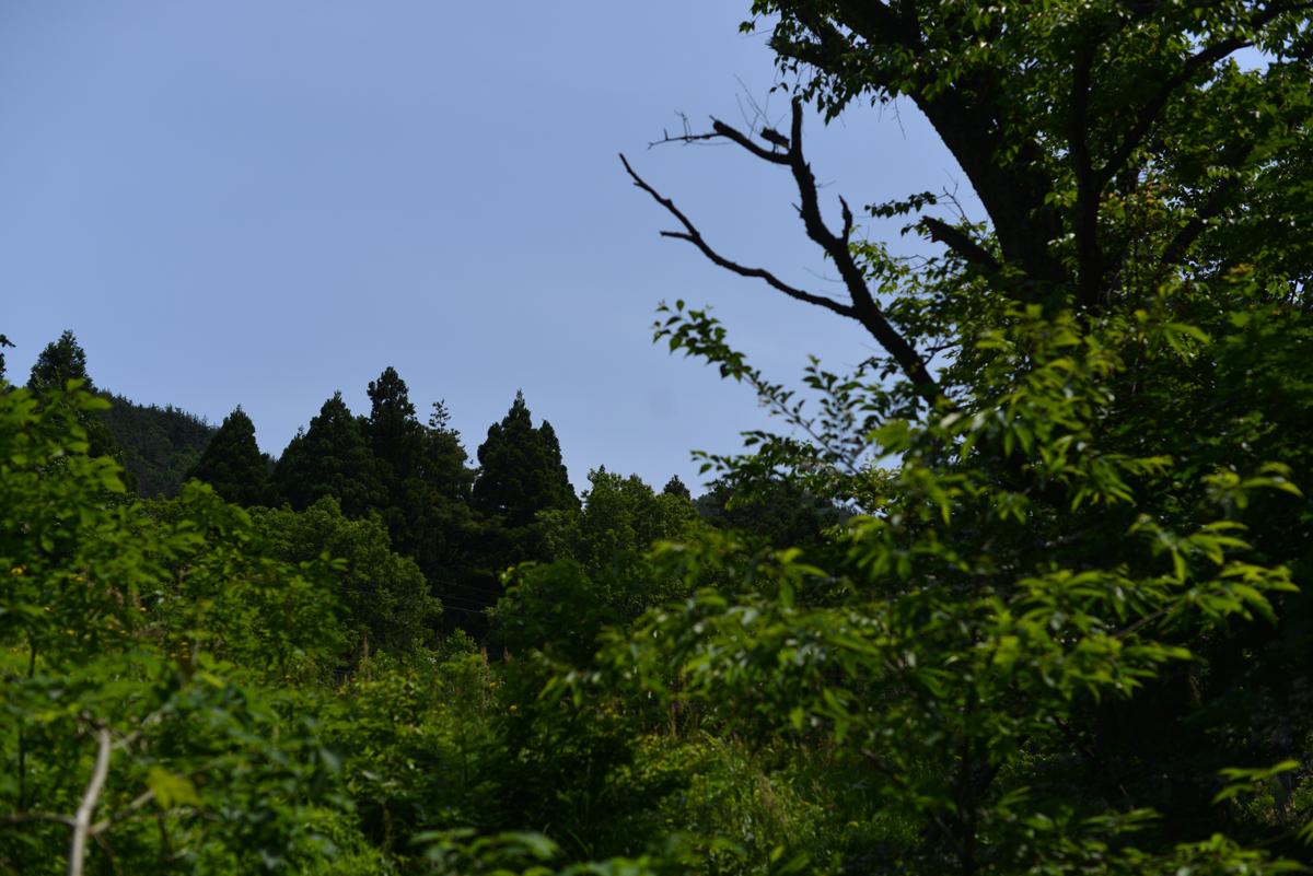 kodama20180527-15 散歩道をぶらりと歩いてみよう 五頭山麓いこいの森