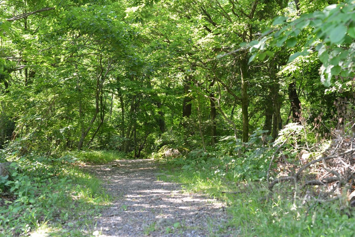 ikoi20180602-03 いつつむりの郷めぐりマップができました 五頭山麓いこいの森