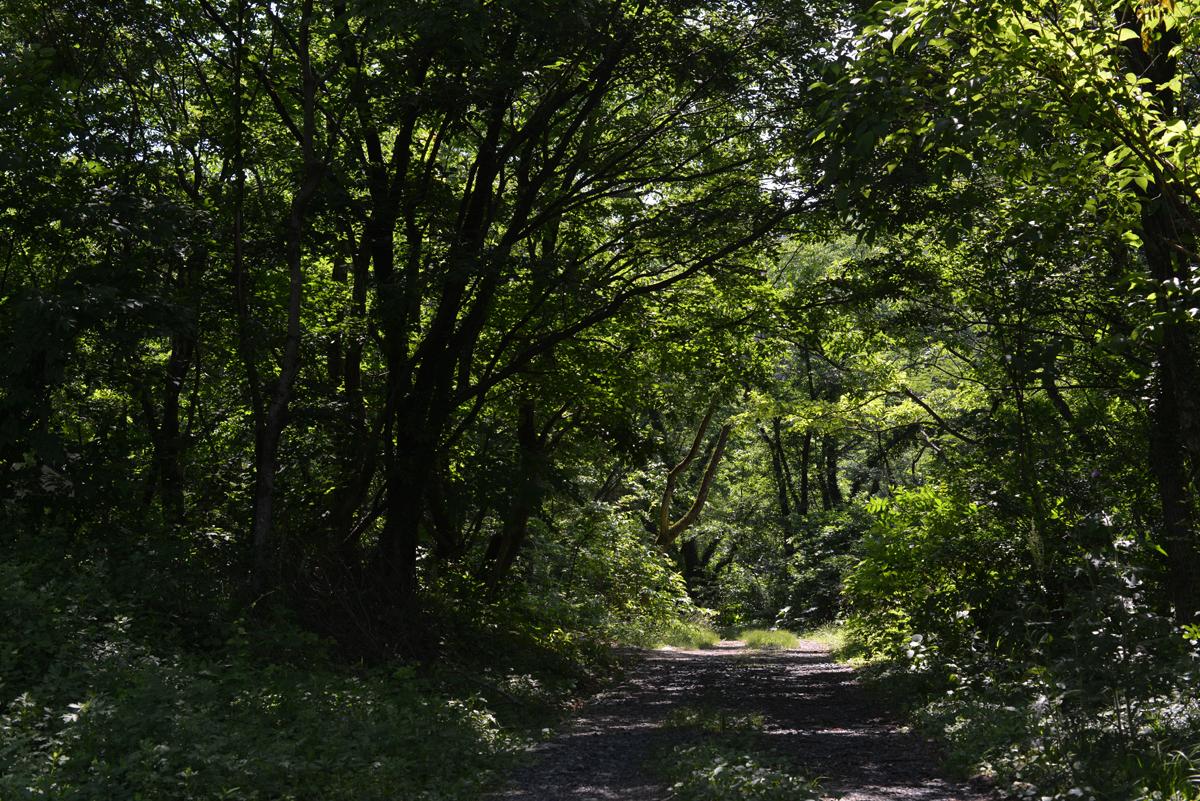 ikoi20180602-06 いつつむりの郷めぐりマップができました 五頭山麓いこいの森