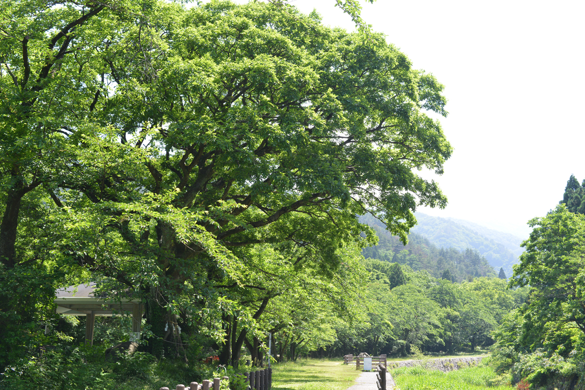 ikoi20180602-07 いつつむりの郷めぐりマップができました 五頭山麓いこいの森