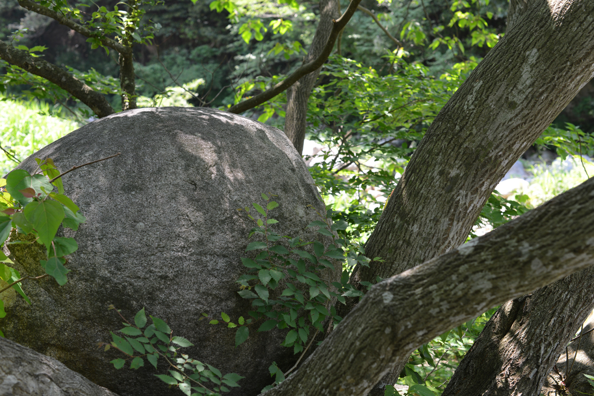 ikoi20180603-08 こだまの森と遊ぶマップを巡ってみた 五頭山麓いこいの森
