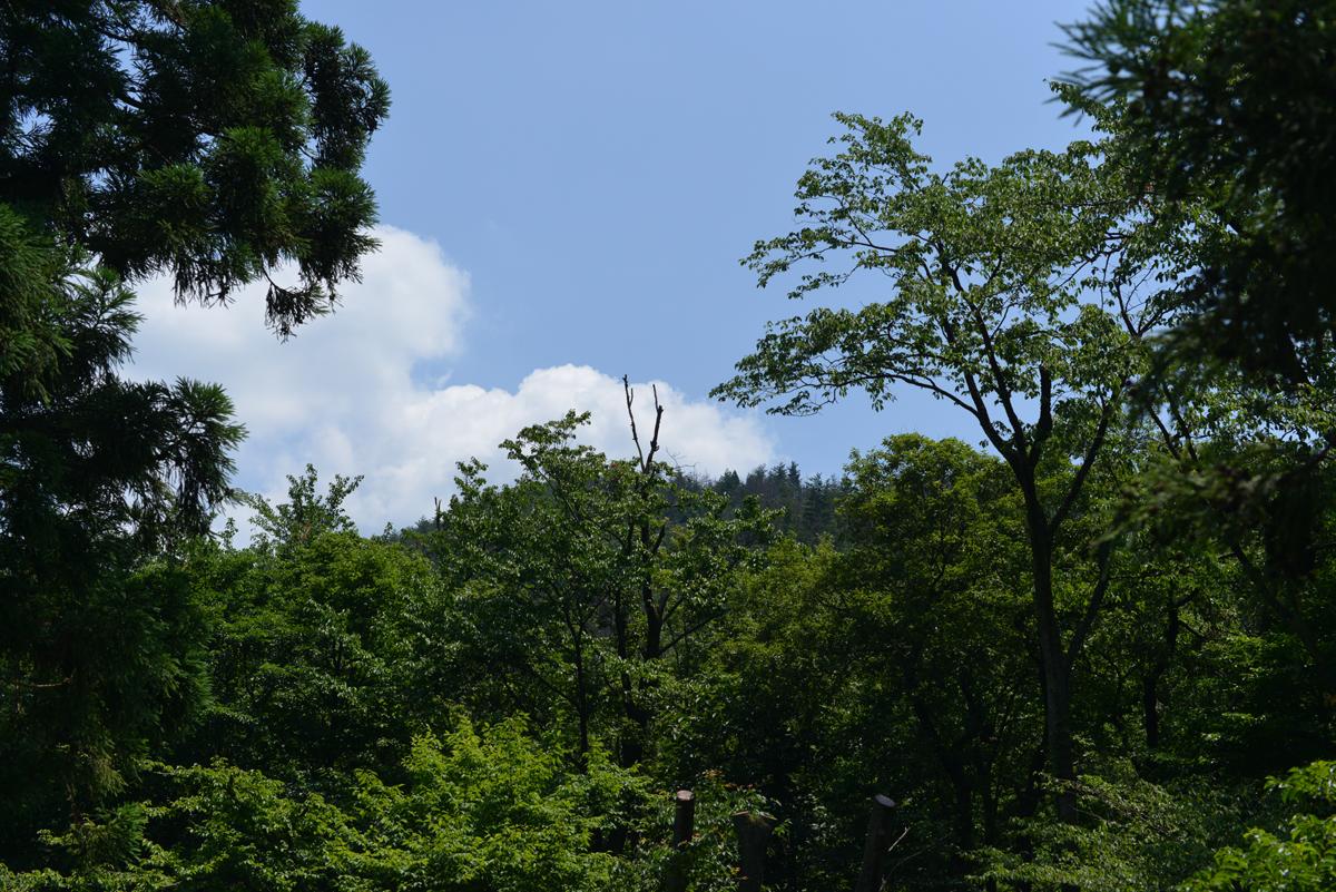 ikoi20180624-01 梅雨の合間の晴れ間に 五頭山麓いこいの森