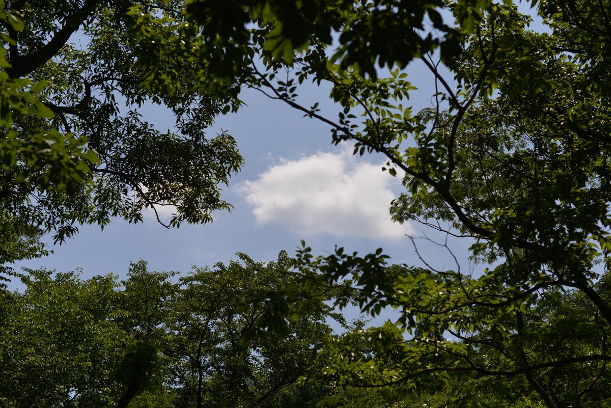 ikoi20180624-02 梅雨の合間の晴れ間に 五頭山麓いこいの森