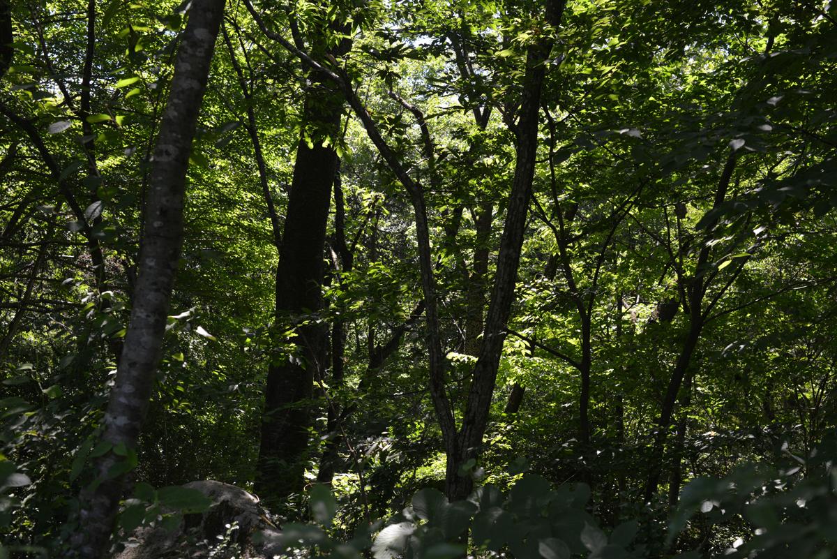 ikoi20180715-07 猛暑の三連休 五頭山麓いこいの森