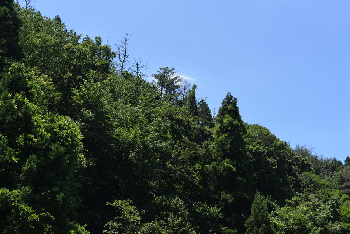 ikoi20180715-16 猛暑の三連休 五頭山麓いこいの森
