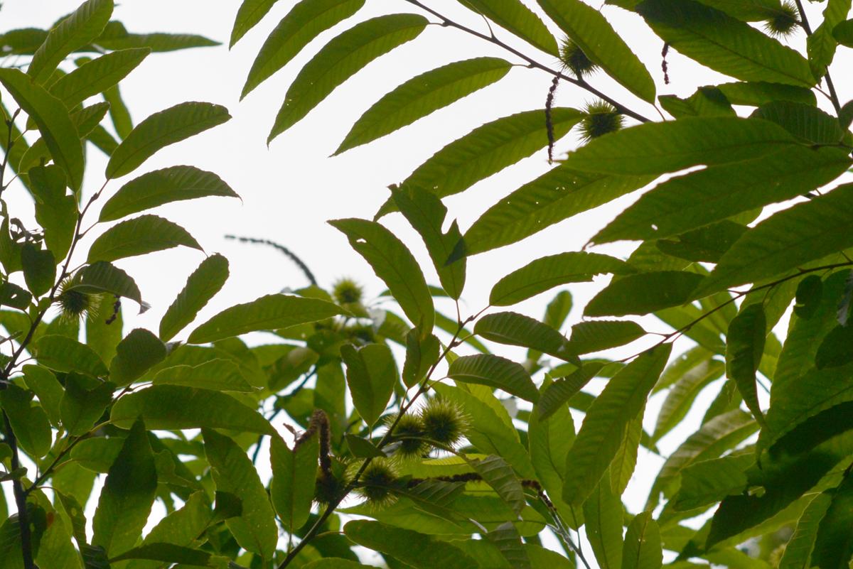 ikoi20180721-07 猛暑のときは川がいい 五頭山麓いこいの森