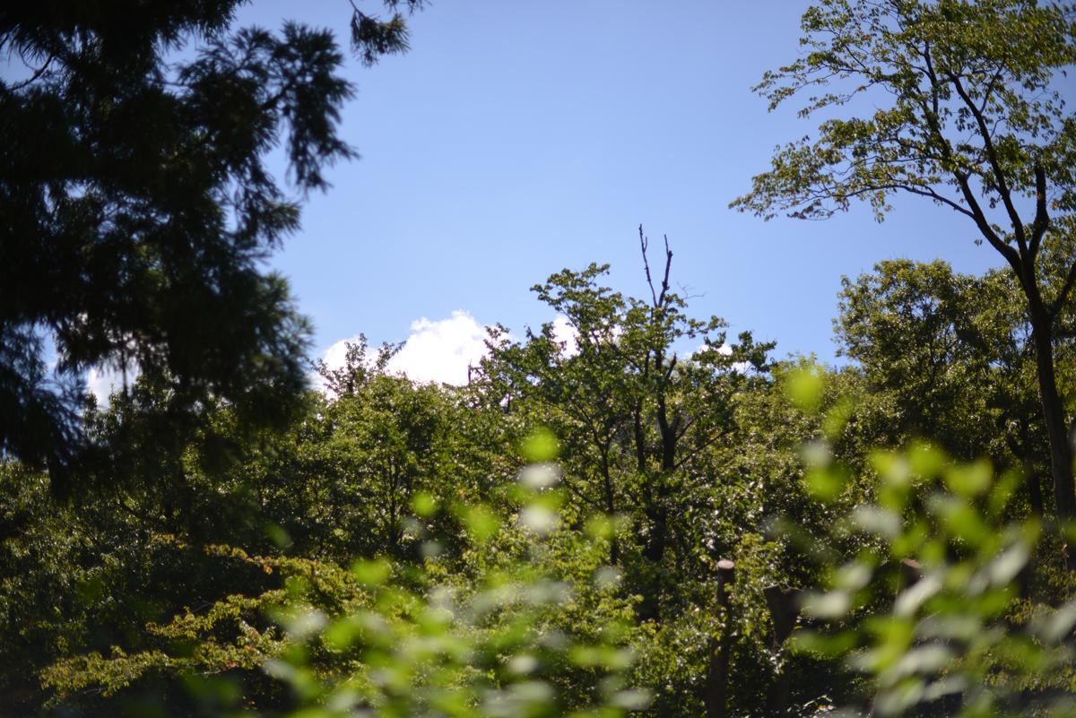 ikoi20180801-01 暑い8月1日 五頭山麓いこいの森