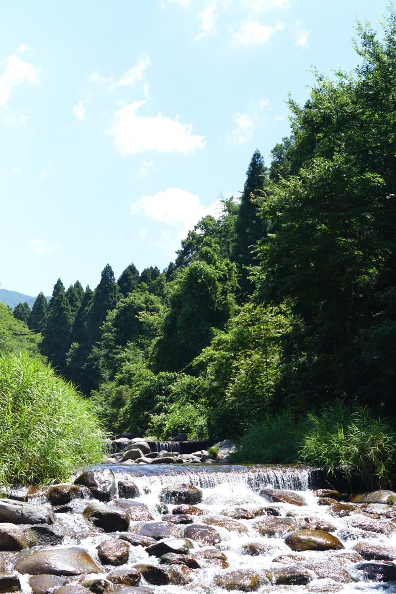 ikoi20180801-03 暑い8月1日 五頭山麓いこいの森