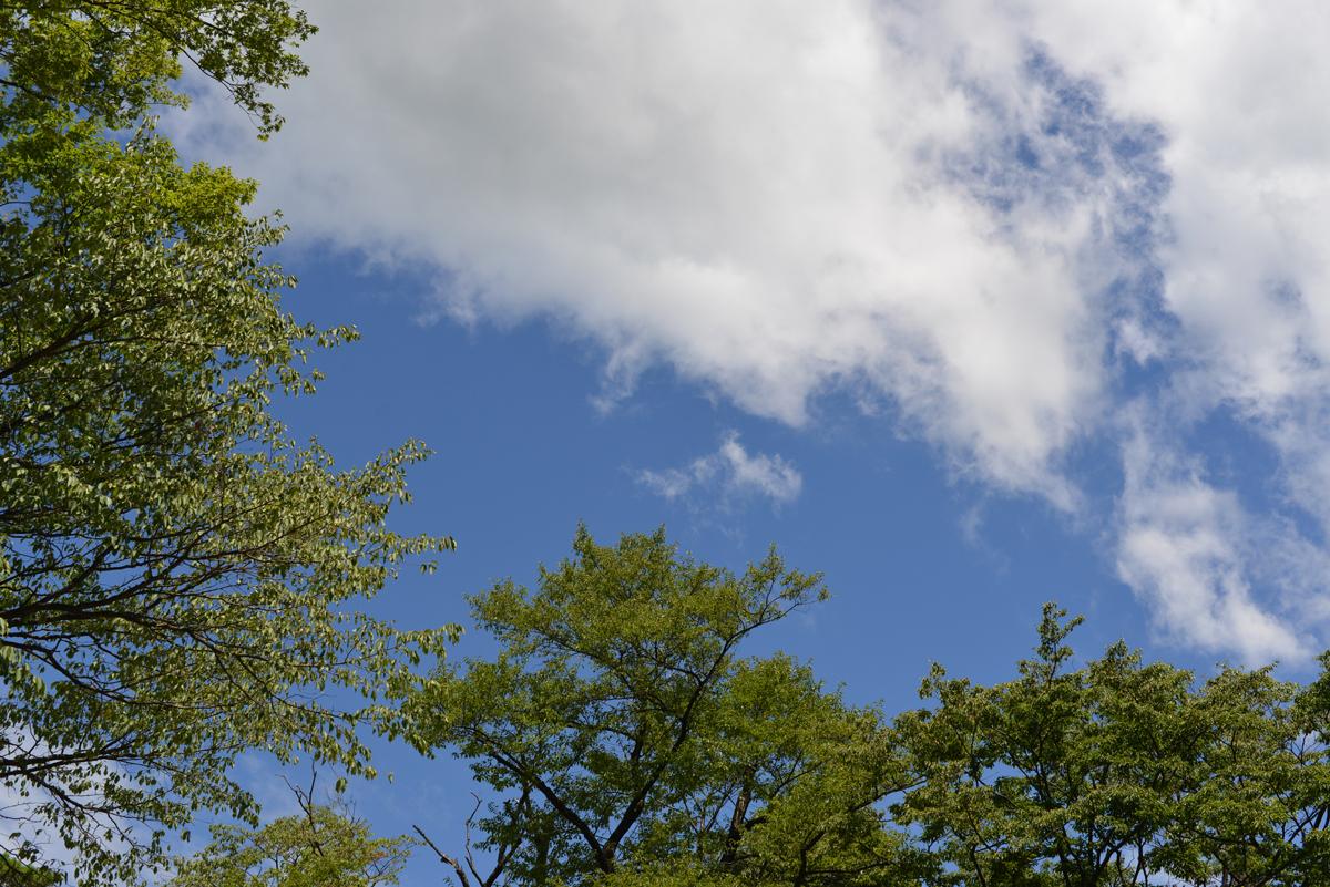 ikoi20180808-01 暑いなかドングリの赤ちゃんを見つける 五頭山麓いこいの森