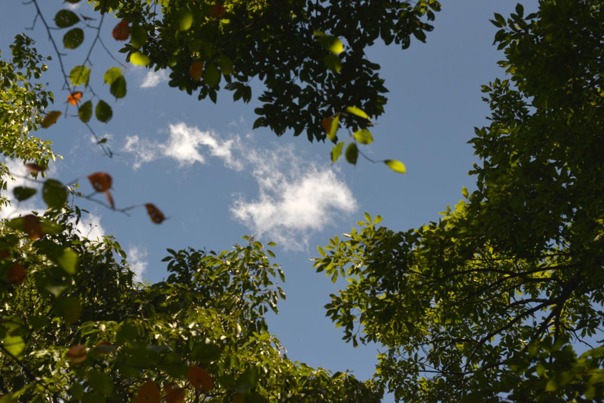 ikoi20180808-03 暑いなかドングリの赤ちゃんを見つける 五頭山麓いこいの森