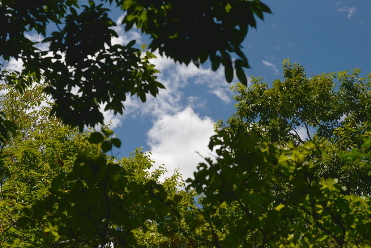 ikoi20180808-04 暑いなかドングリの赤ちゃんを見つける 五頭山麓いこいの森