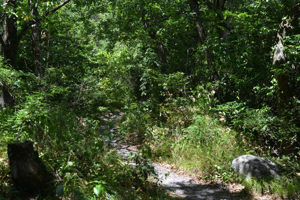 ikoi20180808-05 暑いなかドングリの赤ちゃんを見つける 五頭山麓いこいの森