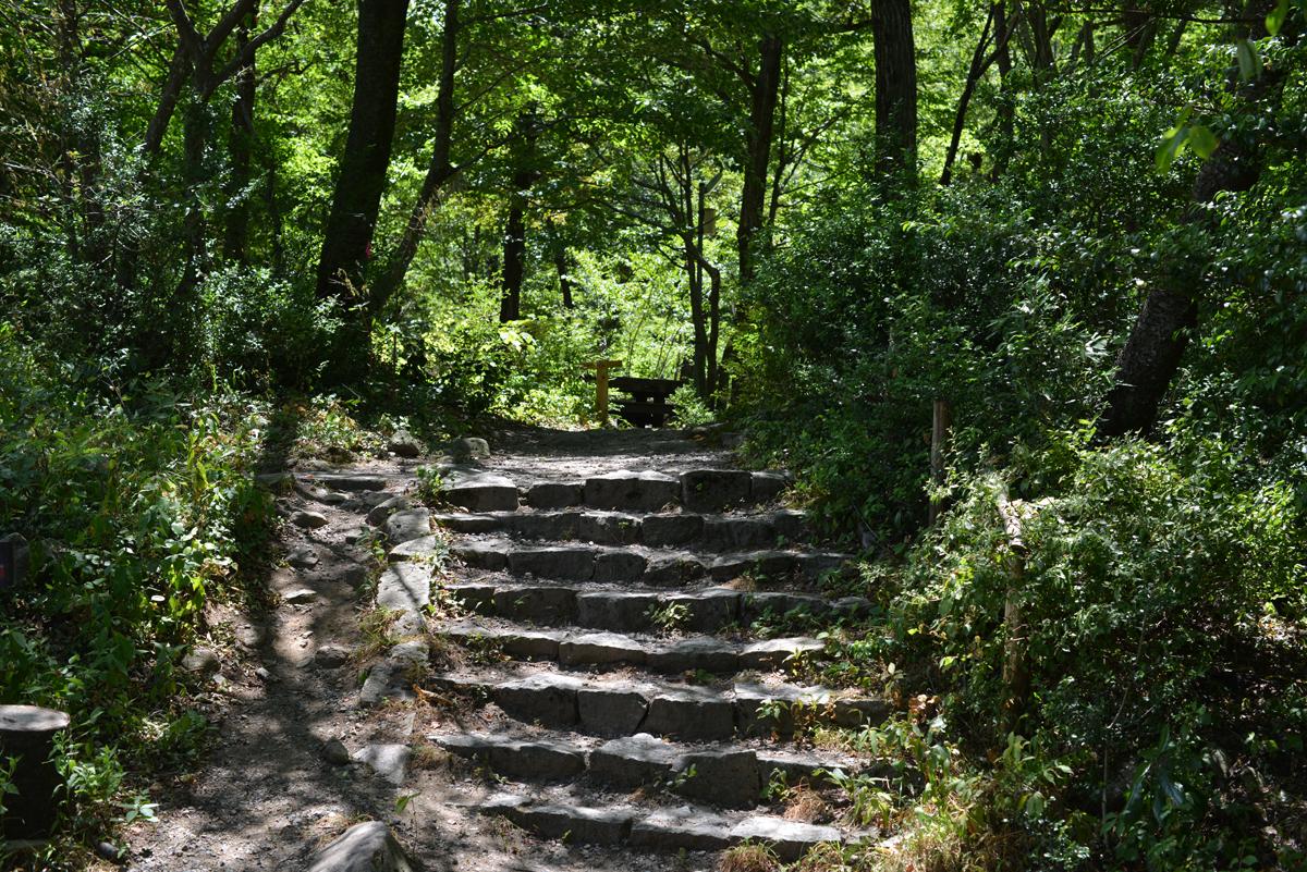 ikoi20180808-07 暑いなかドングリの赤ちゃんを見つける 五頭山麓いこいの森