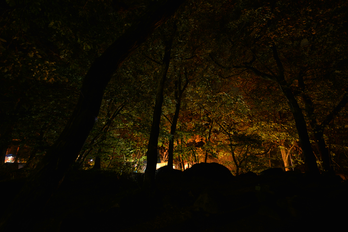 ikoi20180812-n04 ペルセウス座流星群が見えるかな 五頭山麓いこいの森