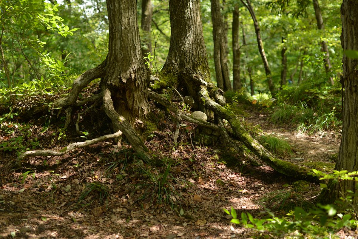 ikoi20180817-07 どしゃ降りから晴れ間が見えて涼しくなった 五頭山麓いこいの森