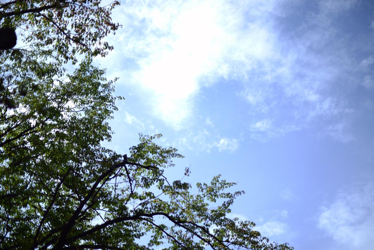 ikoi20180827-01 雨が降ったらカメラを持って外に出たくなる 五頭山麓いこいの森
