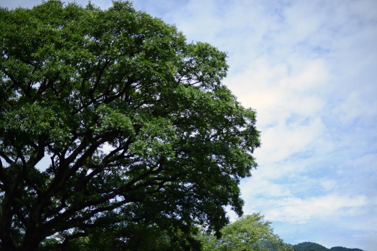 ikoi20180827-02 雨が降ったらカメラを持って外に出たくなる 五頭山麓いこいの森