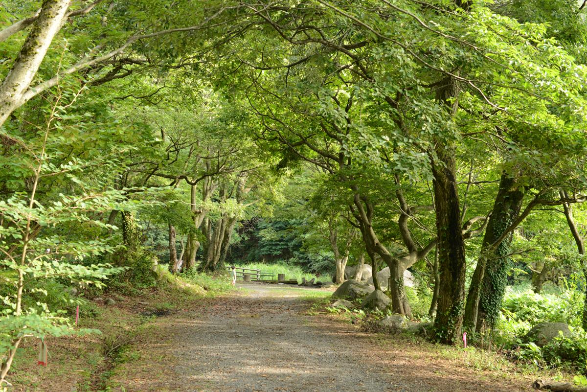 ikoi20180902-02 9月になってだいぶ涼しい森の中 五頭山麓いこいの森