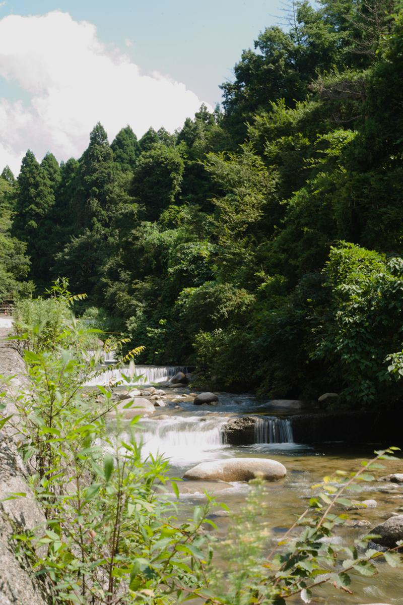 ikoi20180906-04 台風が通り過ぎて蒸し暑い 五頭山麓いこいの森