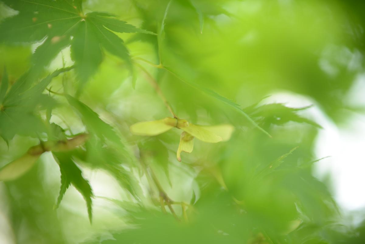 ikoi20180913-01 秋ならでは 五頭山麓いこいの森