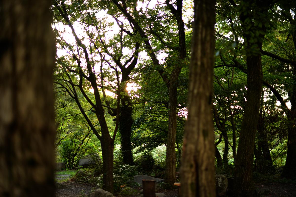 ikoi20180918-02 秋の夜にキャンプをして探検してみた 五頭山麓いこいの森