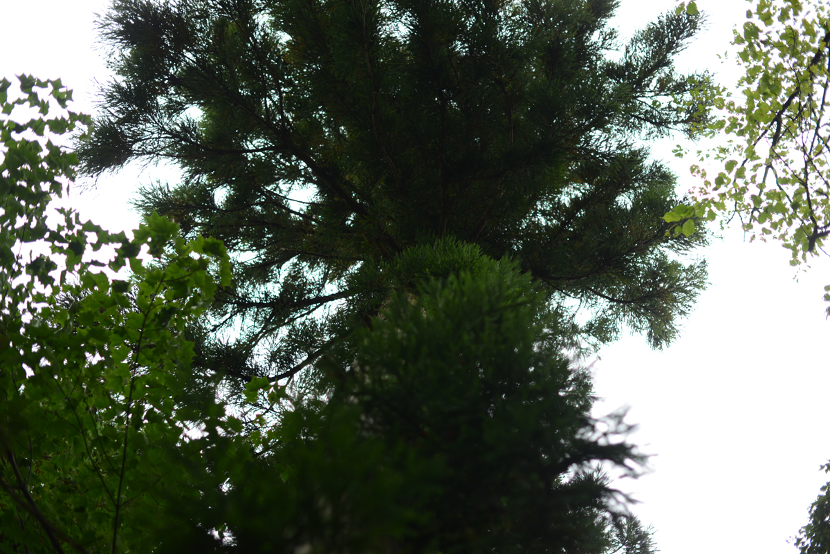 ikoi20181002-02 樹木医さんがやってくる!10月20日は五頭山麓いこいの森へ! 五頭山麓いこいの森