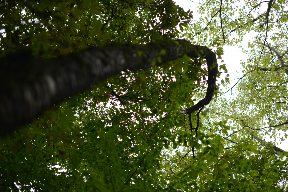 ikoi20181002-03 樹木医さんがやってくる!10月20日は五頭山麓いこいの森へ! 五頭山麓いこいの森