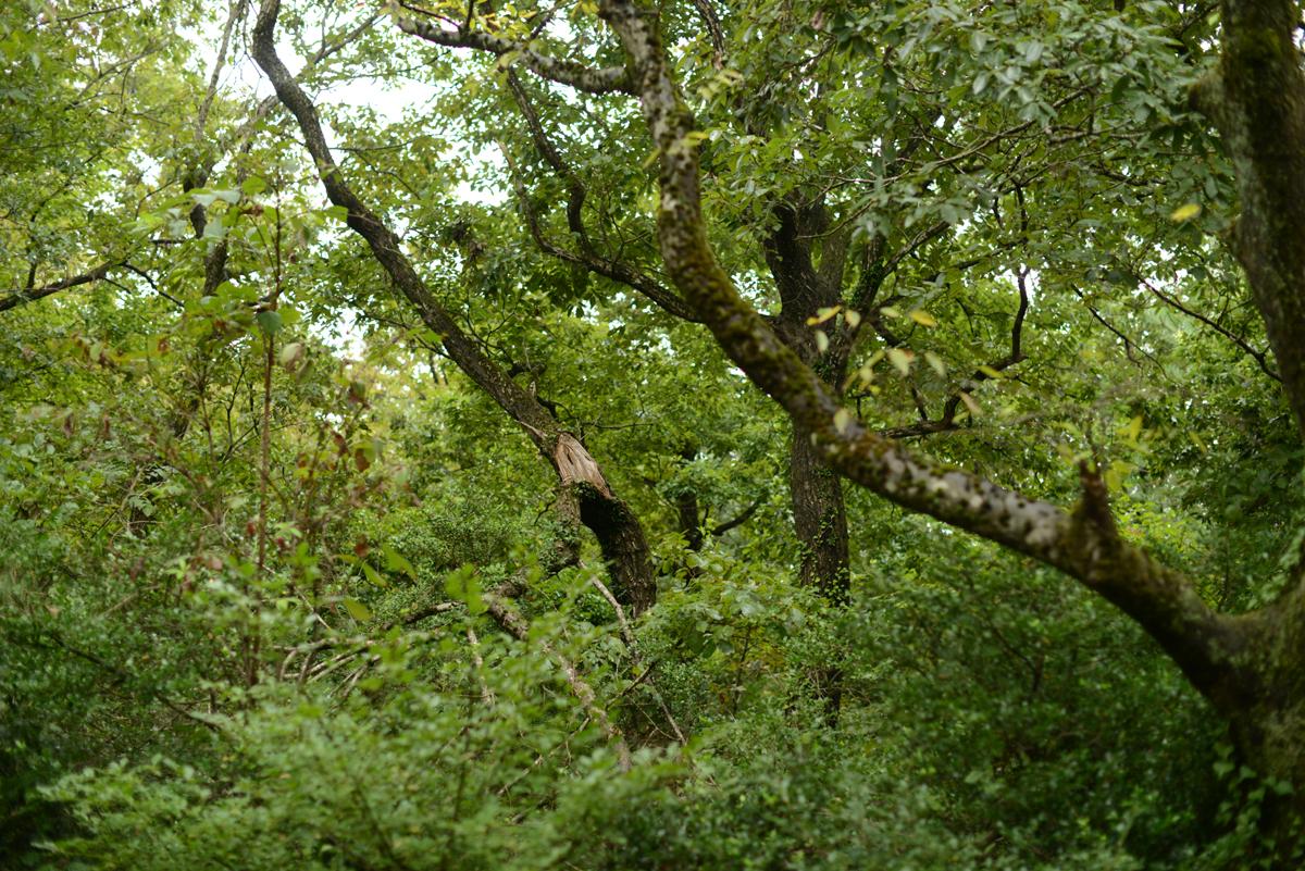 ikoi20181002-10 樹木医さんがやってくる!10月20日は五頭山麓いこいの森へ! 五頭山麓いこいの森